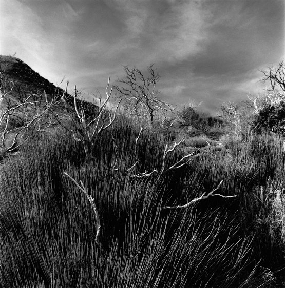Phantom Limbs c2012 selenium toned silver gelatin print. Hwy 158 near Toiyabe National Forest, Mount Charleston, NV.